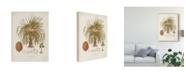 """Trademark Global Elizabeth Twining Antique Tropical Palm II Canvas Art - 20"""" x 25"""""""