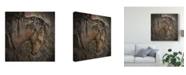 "Trademark Global Christine Sainte-Laudy Majestic Stone Horse Canvas Art - 15"" x 20"""