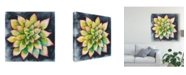 "Trademark Global Chariklia Zarris Succulent Rosette IV Canvas Art - 15"" x 20"""