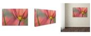 "Trademark Global Cora Niele 'Tulipa Planifolia' Canvas Art - 24"" x 16"" x 2"""
