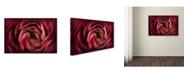 "Trademark Global Cora Niele 'Glowing Ruby Red Ranunculus' Canvas Art - 32"" x 22"" x 2"""