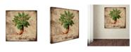 "Trademark Global Tina Lavoie 'Mandrake' Canvas Art - 24"" x 24"" x 2"""