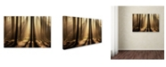 "Trademark Global Robert Harding Picture Library 'Dark Forest' Canvas Art - 24"" x 16"" x 2"""