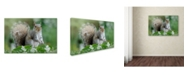 "Trademark Global Jacky Parker 'Eastern Grey Squirrel' Canvas Art - 47"" x 30"" x 2"""