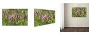 """Trademark Global Kurt Shaffer 'Seedum Detail' Canvas Art - 12"""" x 19"""""""