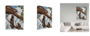 "Trademark Global Rusty Frentner 'Ringtail Reveille' Canvas Art - 18"" x 24"""