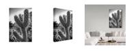 "Trademark Global Janice Sullivan 'Cactus Close Up' Canvas Art - 12"" x 19"""