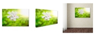 "Trademark Global PIPA Fine Art 'Beauty of the Forest Floor' Canvas Art - 30"" x 47"""
