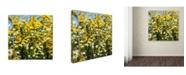 "Trademark Global Kurt Shaffer 'Sunny Meadow' Canvas Art - 35"" x 35"""