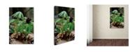 "Trademark Global Kurt Shaffer 'New Spring Growth from the Forest Floor' Canvas Art - 30"" x 47"""