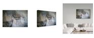 "Trademark Global Ron Parker 'Mountain Mists Cougar' Canvas Art - 22"" x 32"""