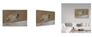 "Trademark Global Rusty Frentner 'Polar Bear' Canvas Art - 30"" x 47"""