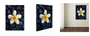 "Trademark Global David Evans 'Plumeria & Pebbles 3' Canvas Art - 18"" x 24"""