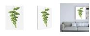 """Trademark Global Lexie Gree Green Maidenhair Canvas Art - 36.5"""" x 48"""""""