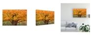 "Trademark Global Monte Nagler Maple Tree in Autumn Big Bay Michigan Color Canvas Art - 37"" x 49"""