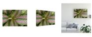 "Trademark Global Monte Nagler Persian Shield Leaves Ann Arbor Michigan Color Canvas Art - 37"" x 49"""