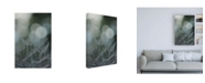 "Trademark Global Renee W. Stramel Macro Dandelion IX Canvas Art - 36.5"" x 48"""