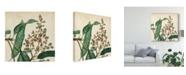 "Trademark Global Vision Studio Garden Bounty II Canvas Art - 20"" x 25"""