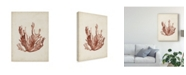 "Trademark Global Naomi Mccavitt Seaweed Specimens VII Canvas Art - 37"" x 49"""