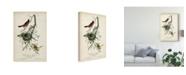 "Trademark Global John James Audubon Orchard Orioles Canvas Art - 20"" x 25"""