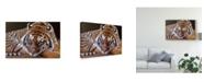"Trademark Global Pip Mcgarry Sumatran Tiger Resting Canvas Art - 20"" x 25"""