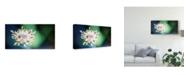 "Trademark Global Pixie Pics Macro Flower Head Canvas Art - 37"" x 49"""