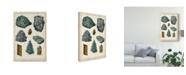 "Trademark Global Vision Studio Mineralogie II Canvas Art - 15"" x 20"""