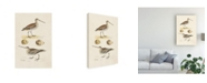 "Trademark Global Morris Sandpipers and Eggs III Canvas Art - 37"" x 49"""