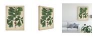 """Trademark Global John Torrey Oak Leaves and Acorns I Canvas Art - 15"""" x 20"""""""