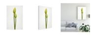"Trademark Global Lotte Gronkjar Tulip Time Green Canvas Art - 20"" x 25"""