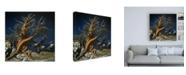 "Trademark Global John Van Straalen Portrait of Majesty Canvas Art - 19.5"" x 26"""