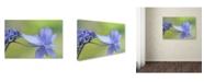 "Trademark Global Cora Niele 'Blue Hydrangea' Canvas Art - 19"" x 12"" x 2"""