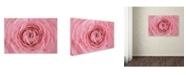 "Trademark Global Cora Niele 'Pink Persian Buttercup Flower' Canvas Art - 24"" x 16"" x 2"""