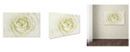 "Trademark Global Cora Niele 'White Persian Buttercup' Canvas Art - 24"" x 16"" x 2"""