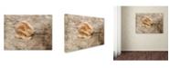 "Trademark Global Jai Johnson 'Vintage Rose 6' Canvas Art - 19"" x 14"" x 2"""
