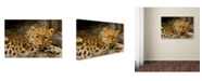 "Trademark Global Mike Jones Photo 'Denver Zoo Snow Leopard' Canvas Art - 24"" x 16"" x 2"""