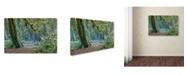 "Trademark Global Mike Jones Photo 'Olympic NP Trail' Canvas Art - 47"" x 30"" x 2"""