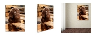 "Trademark Global Mike Jones Photo 'Bryce Puppy' Canvas Art - 47"" x 35"" x 2"""