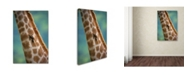 "Trademark Global Robert Harding Picture Library 'Giraffe' Canvas Art - 32"" x 22"" x 2"""