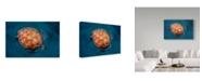 "Trademark Global Sergi Garcia 'Spin Turtle' Canvas Art - 47"" x 2"" x 30"""
