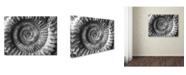 """Trademark Global Moises Levy 'Amonita 2' Canvas Art - 24"""" x 18"""" x 2"""""""