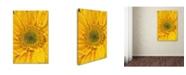 "Trademark Global PIPA Fine Art 'Joyful Color' Canvas Art - 12"" x 19"""