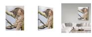 "Trademark Global Janet Pidoux 'Tabby In Tree' Canvas Art - 14"" x 19"""