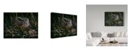 "Trademark Global Wilhelm Goebel 'Timberdoodle' Canvas Art - 24"" x 32"""