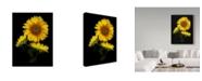 "Trademark Global Susan S. Barmon 'Sunflower 3' Canvas Art - 35"" x 47"""