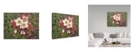 "Trademark Global Jan Benz 'Hellebores' Canvas Art - 32"" x 24"""