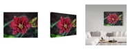 "Trademark Global J.D. Mcfarlan 'Day Lilly' Canvas Art - 47"" x 35"""