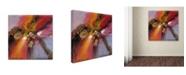 "Trademark Global Ricardo Tapia 'Sunset' Canvas Art - 35"" x 35"""