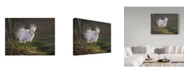 "Trademark Global Wilhelm Goebel 'White Heron Feathers' Canvas Art - 14"" x 19"""