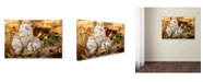 "Trademark Global Jason Shaffer 'Autumn Mushrooms' Canvas Art - 32"" x 22"""